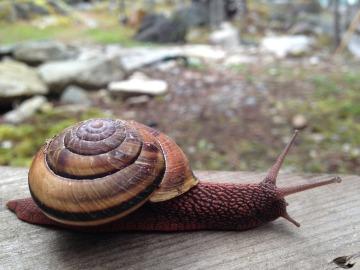 snail-532902_1920