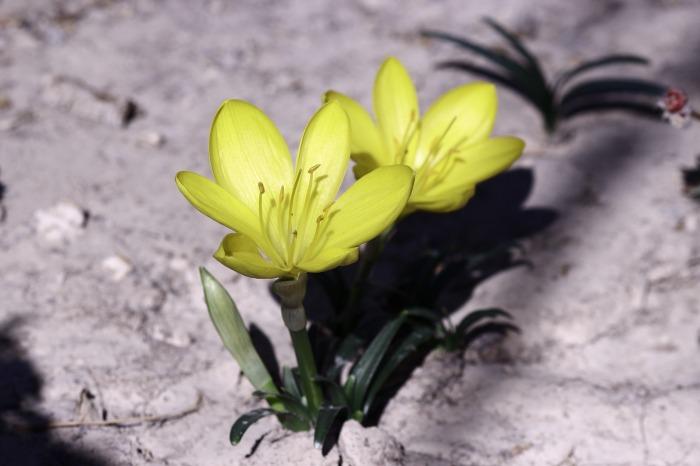 flower-1708566_1920
