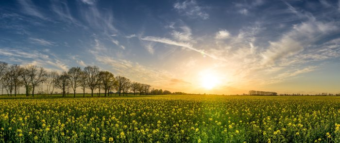 agriculture-bloom-blossom-355312